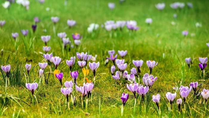 Primavera. La estación del amor
